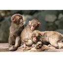 記事ID 201204111733: 高崎山自然動物園 - 情報登録日: [20120411] / 情報更新日: [20120411]