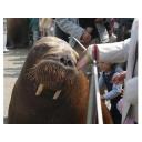 記事ID 201204161716: 大分マリーンパレス水族館 うみたまご - 情報登録日: [20120416] / 情報更新日: [20120416]