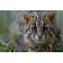 記事ID 201208241523: 対馬野生生物保護センター - 情報登録日: [20120824] / 情報更新日: [20120824]