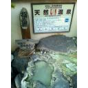 記事ID 201411191245: 「指の湯」雲仙いわき旅館 - 指の湯 - 情報登録日: [20141119] / 情報更新日: [20141119]